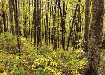 OutLab④黄葉のブナの森を歩こう!花渕山トレッキング